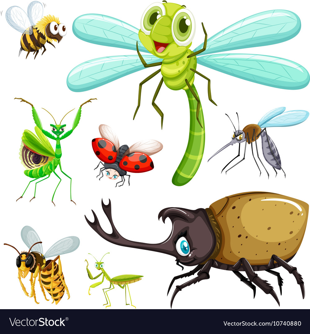 Different kinds of insects vector