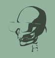 anatomic of skull vector image