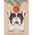 Christmas card with French Bulldog vector image