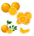 oranges and orange products natural vector image
