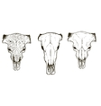 Drawing animal skulls set vector image