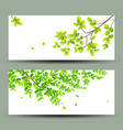 tropical green leaves banners collections vector image