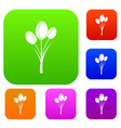 tulips set color collection vector image