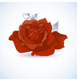 Red rose design vector image