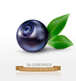 blueberries isolated on a white background vector image