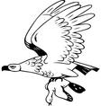Eagle flies with prey vector image vector image