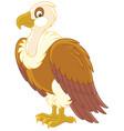 white-headed vulture vector image