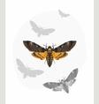 Butterfly Deaths head Hawk moth vector image
