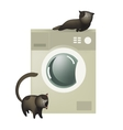 Cute cats with washing machine vector image