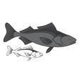 Sablefish vector image