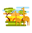 african savannah safari and giraffe summer vector image