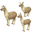 maturation stages of lama three stages of growth vector image