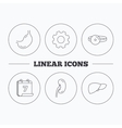 Kidney liver and stomach organ icons vector image