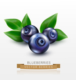 three blueberries with green leaves isolated vector image vector image