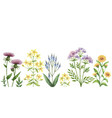 watercolor banner with medical plants vector image