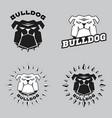 set logo bulldog head vector image
