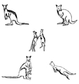 Kangaroo A sketch by hand Pencil drawing vector image