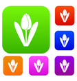 tulip set collection vector image