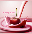 cherry falling in the yogurt vector image