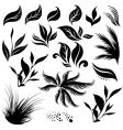 plant design elemets vector image
