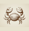 crab painted in engraving style vector image