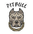 The head of a pit bull with a chain vector image