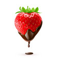 strawberry in chocolate drop on white background vector image