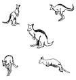 Kangaroo A sketch by hand Pencil drawing vector image