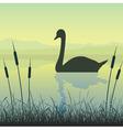 Swan on water vector image