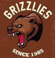 vintage bear mascot vector image vector image