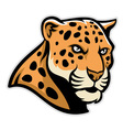 jaguar head mascot vector image vector image