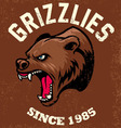 vintage bear mascot vector image