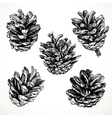 Sketch drawing pine cones on white background vector image