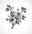Hand-drawn twig with flowers vintage isolated vector image vector image