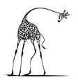 graceful giraffe vector image
