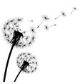 black silhouette with flying dandelion buds vector image