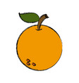 orange fruit citrus nature food fresh vector image