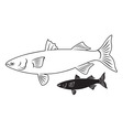fish mullet vector image vector image