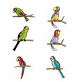 Set of Parrots Isolated on White vector image