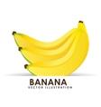 banana cluster vector image