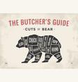 butcher diagram scheme - bear vector image