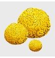 Yellow underwater sponge polyps in form of brains vector image