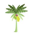 Banana Tree with Bananas and Blossom vector image
