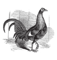 Gamecock vintage engraving vector image