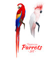 tropical parrots realistic set vector image