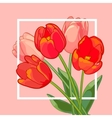 Pink and Red tulips bouquet on pink background vector image