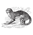 Night monkey vintage engraving vector image