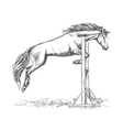 White horse jumping over barrier sketch portrait vector image