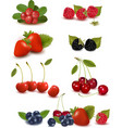 big set of berries and cherries vector image vector image