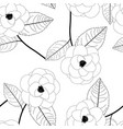 camellia flower on white background
